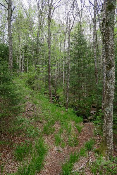 Mountains-to-Sea Trail -- 5,680'