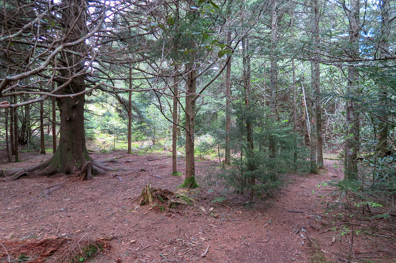 Mountains-to-Sea/Green Mountain Trail Junction -- 5,780'