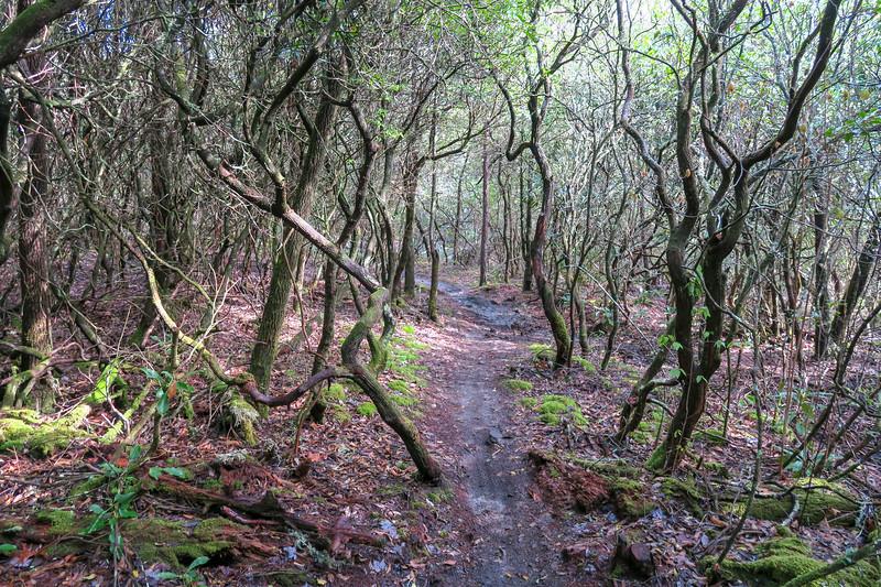 Mullinax Trail -- 2,880'