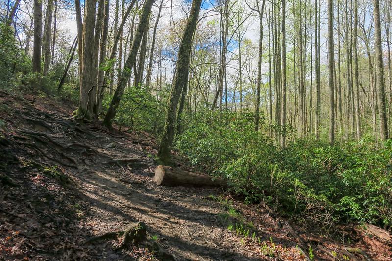 Mullinax Trail -- 2,850'