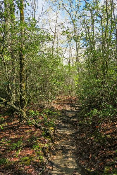 Mullinax Trail -- 2,960'