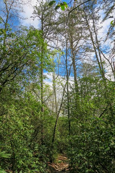 Mullinax Trail -- 2,920'