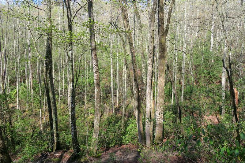 Mullinax Trail -- 2,900'