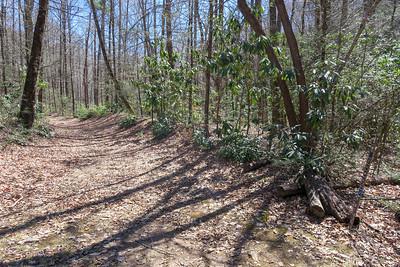 North Mills River Trail -- 2,400'