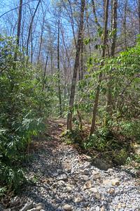 North Mills River Trail -- 2,330'