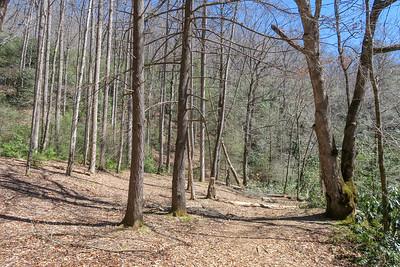 North Mills River Trail -- 2,350'