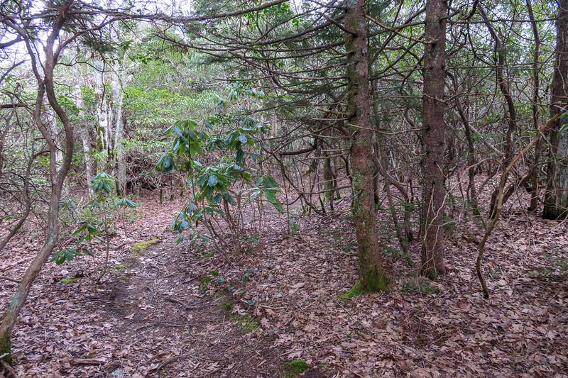 Old Butt Knob Trail -- 5,250'