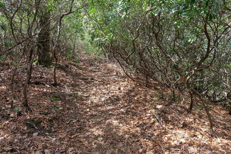 Old Butt Knob Trail -- 4,000'