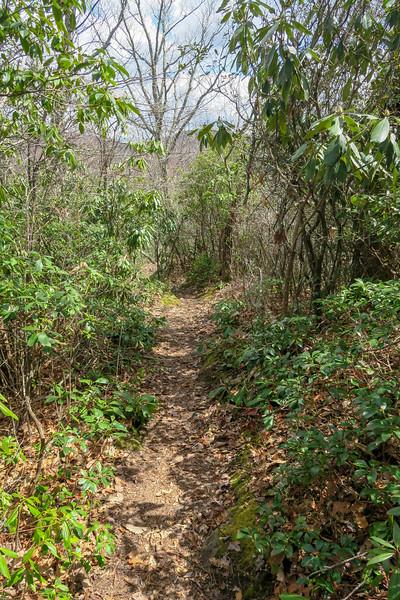 Old Butt Knob Trail -- 4,300'