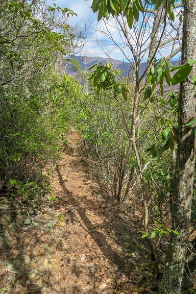 Old Butt Knob Trail -- 5,000'