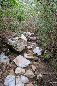 Old Butt Knob Trail -- 5,920'