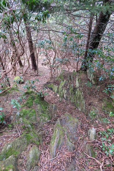 Old Butt Knob Trail -- 5,500'