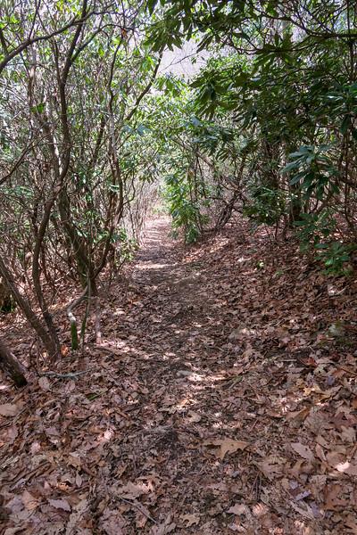 Old Butt Knob Trail -- 4,100'