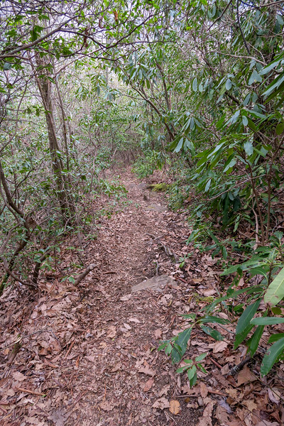 Old Butt Knob Trail -- 4,500'