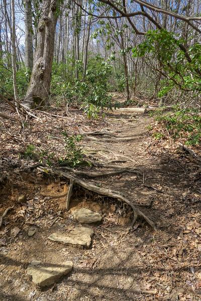 Old Butt Knob Trail -- 3,700'