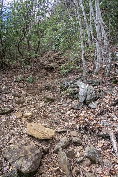 Old Butt Knob Trail -- 4,800'