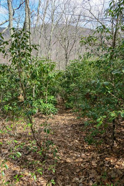 Old Butt Knob Trail -- 4,200'