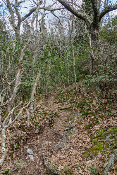 Old Butt Knob Trail -- 5,450'