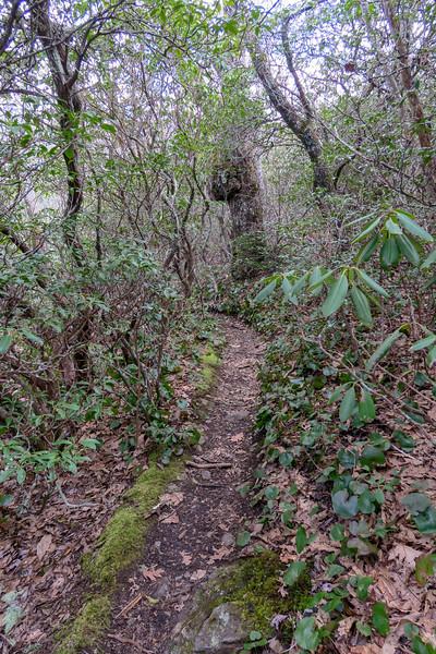Old Butt Knob Trail -- 5,350'