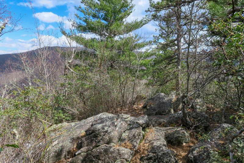 Old Butt Knob Trail -- 4,420'