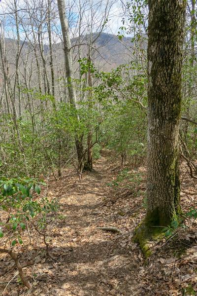 Old Butt Knob Trail -- 3,800'