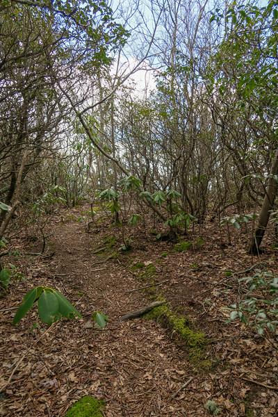 Old Butt Knob Trail @ Upper Ledge Overlook -- 5,440'