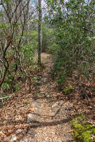 Old Butt Knob Trail -- 4,460'