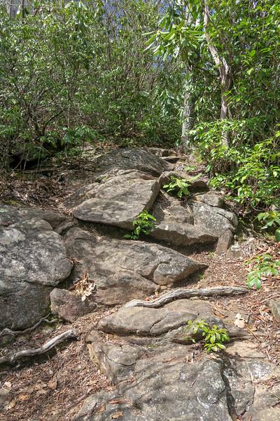 Old Butt Knob Trail -- 4,600'