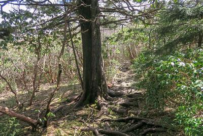 Old Butt Knob Trail -- 5,850'