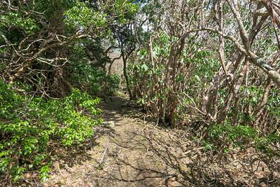 Old Butt Knob Trail -- 5,940'