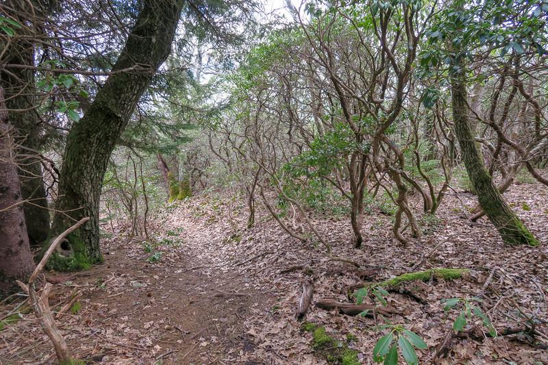 Old Butt Knob Trail -- 5,300'