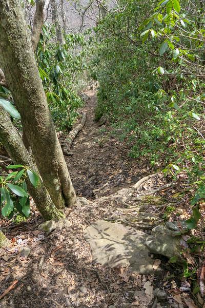 Old Butt Knob Trail -- 4,700'