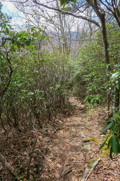 Old Butt Knob Trail -- 5,100'