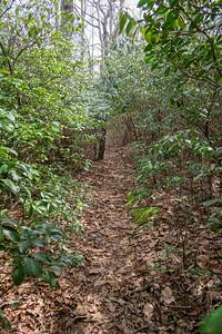 Pilot Cove Loop Trail -- 3,950'