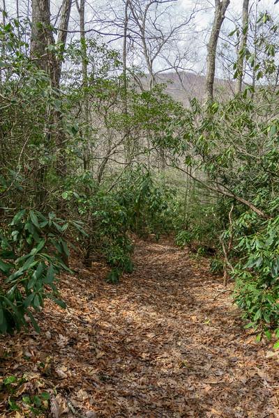 Pilot Cove Loop Trail -- 3,300'