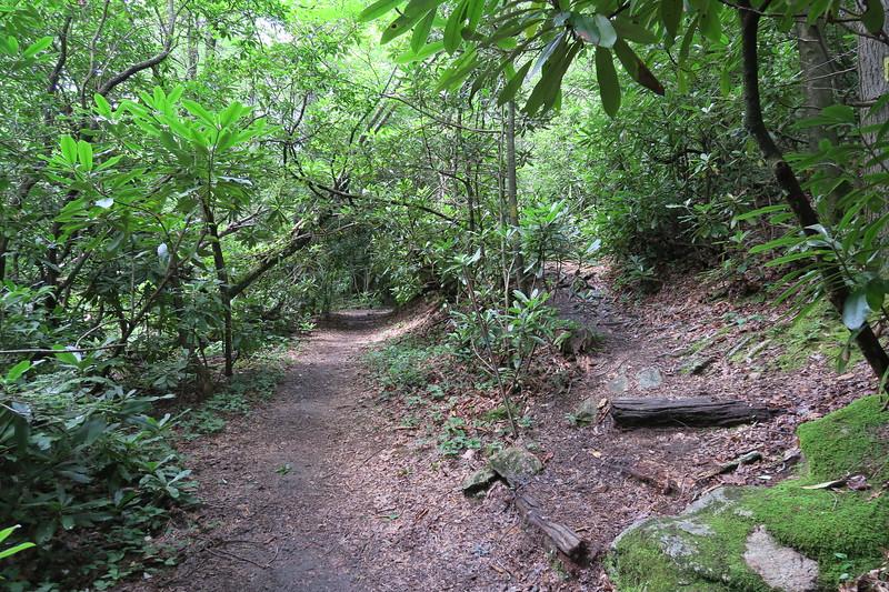 Pilot Cove Loop/Pilot Cove-Slate Rock Trail Lower Junction -- 3,150'