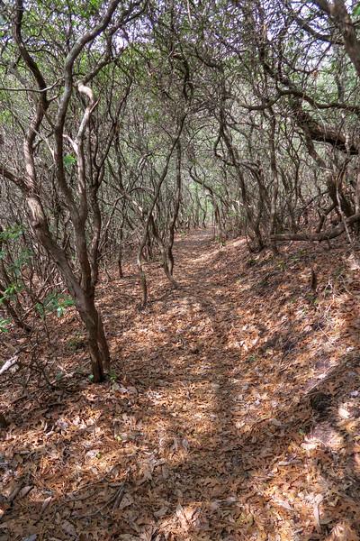 Pilot Cove Loop Trail -- 3,400'