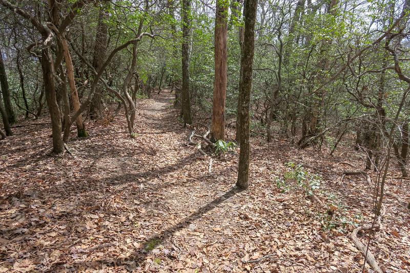 Pilot Cove Loop Trail -- 3,700'