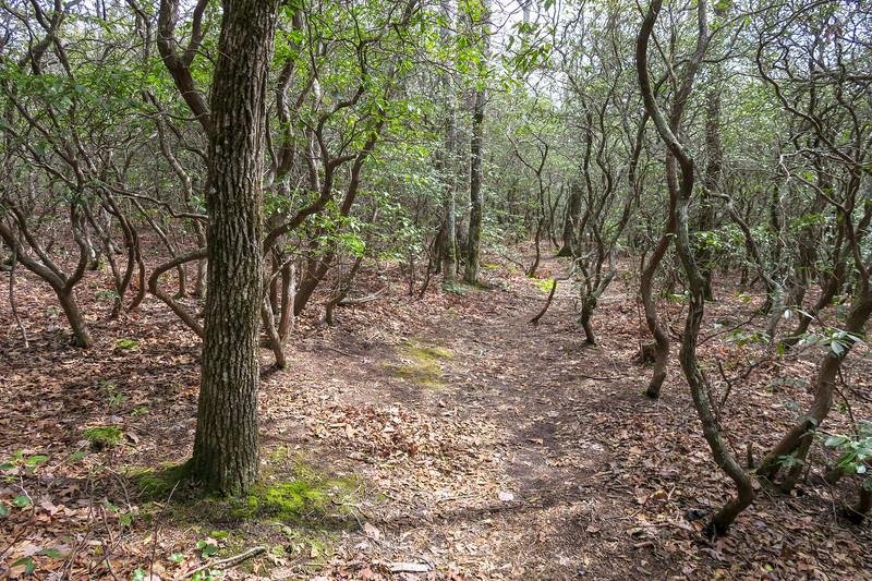 Pilot Cove Loop Trail -- 3,750'