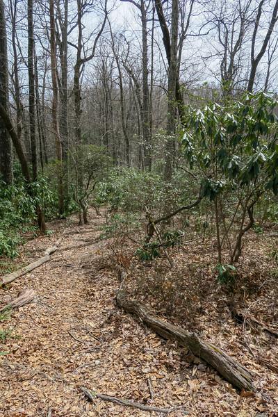 Pilot Cove Loop Trail -- 3,620'