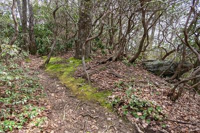 Pilot Cove Loop Trail -- 3,870'