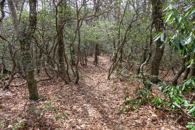 Pilot Cove Loop Trail -- 3,600'