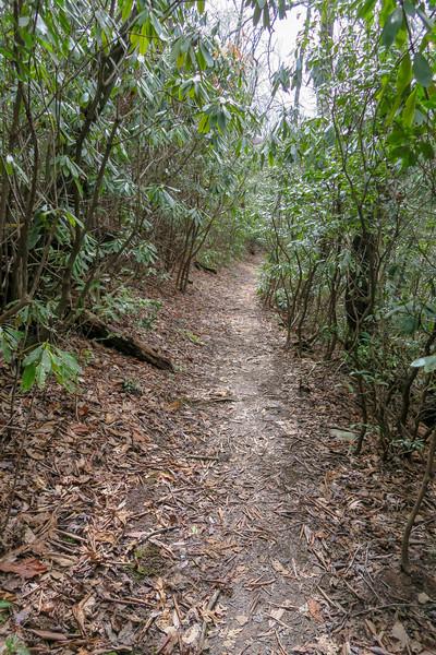 Pilot Cove Loop Trail -- 3,200'