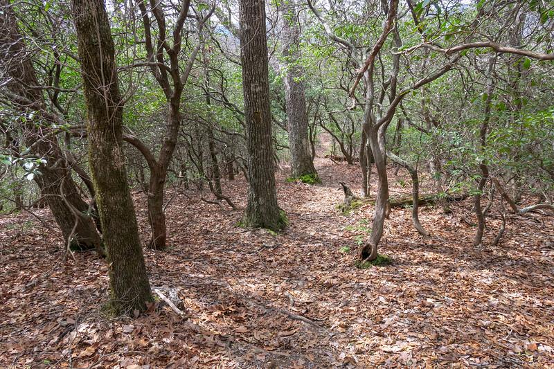 Pilot Cove Loop Trail -- 3,500'