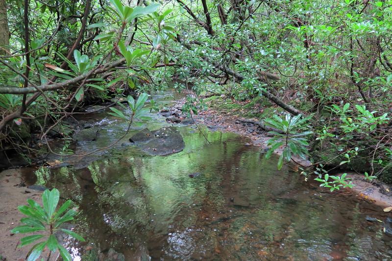 Pilot Cove Creek -- 3,160'