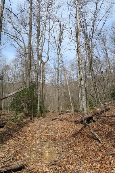 Pilot Cove-Slate Rock Trail -- 3,140'