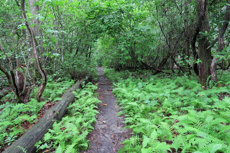Pilot Cove-Slate Rock Trail -- 3,400'