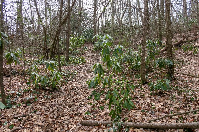 Pilot Cove-Slate Rock Trail -- 3,800'