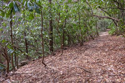 Pilot Cove-Slate Rock Trail -- 3,000'