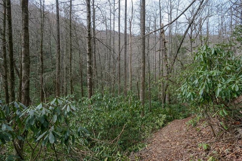 Pilot Cove-Slate Rock Trail -- 3,090'